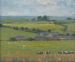 Cows Overlooking Lower Burton Farm