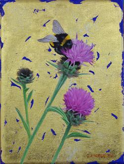 Bumblebee on Knapweed