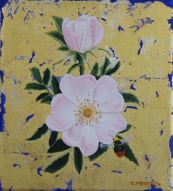 Dog Rose & Bumblebee