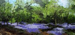 Bluebells, Cowcroft