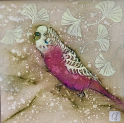 Spring Budgie Pink