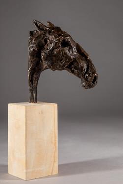 Roman Nose, Head of a Horse