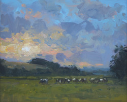Cows Grazing on an Evening, Dorchester 108