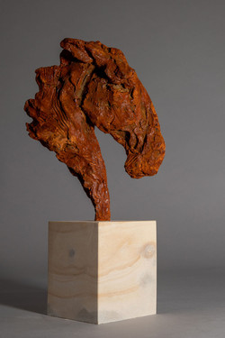War Horse - Head of a Horse (side view)