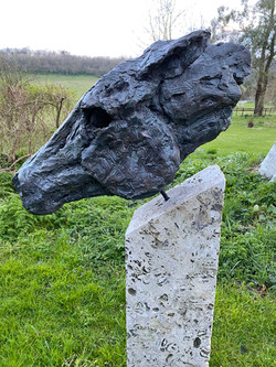 Speed - Head of a Horse (close up)