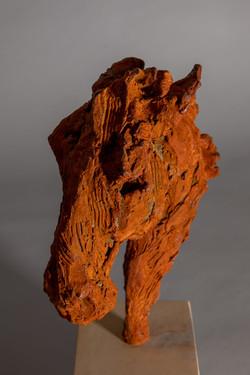 War Horse - Head of a Horse (close-up)