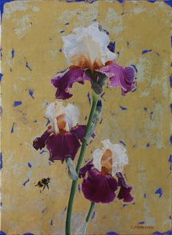 Bearded Iris - Full of Magic