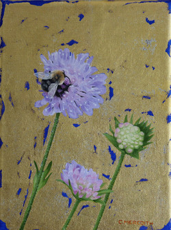 Carder Bee on Scabious