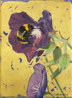 Early Bumblebee & Hardy Geranium