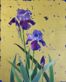 Bearded Iris & Bumblebees
