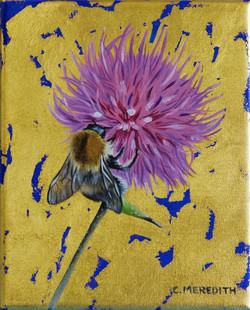 Tree Bumblebee & Thistle