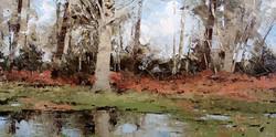Ashridge, Early Spring