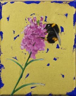 Bumblebee on Toadflax