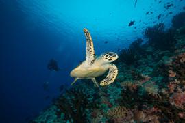 Turtle Wave.jpg
