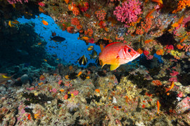 Colourful reef.jpg