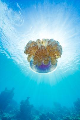Jellyfish Sunball.jpg
