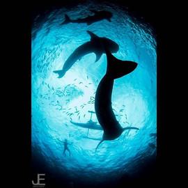1 2 3 whale sharks__#jamesemery #underwa
