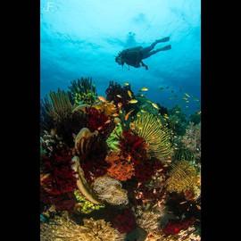 Colourful Reef, Balicasag island_#jamese