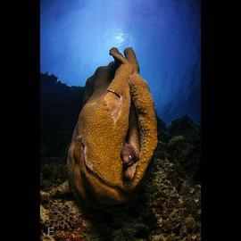 White eyed moray eel _#jamesemery #under