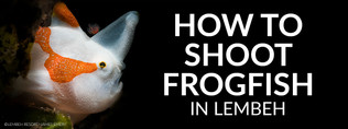 How_To_Shoot_Frogfish_James_Emery_Banner