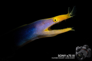 Sony_a7S_III_Underwater_Review_James_Eme