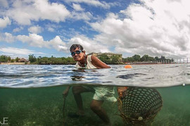 Old lady collecting sea urchins in front
