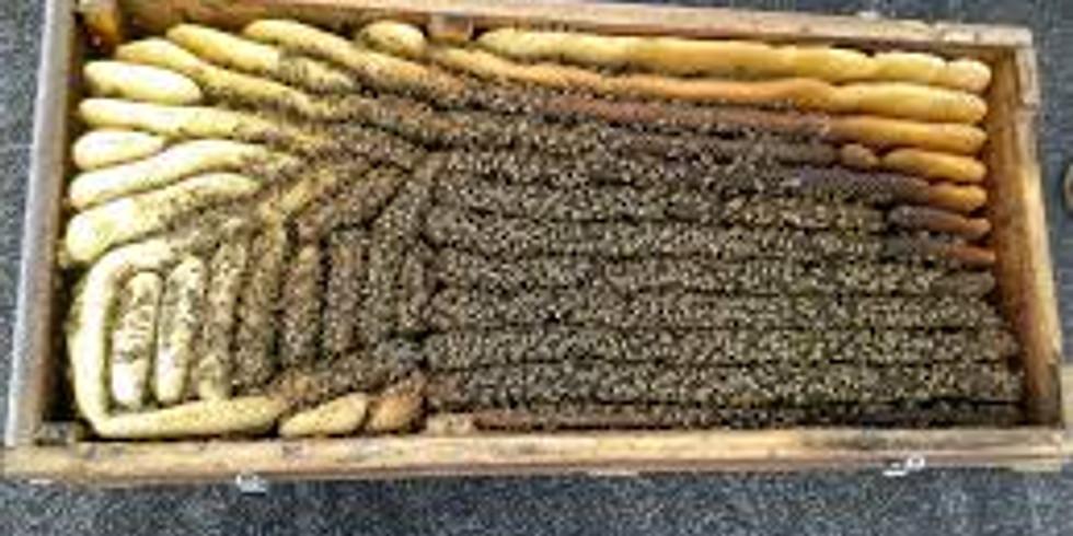 Die Bienenkiste – Haltung und Erfahrung