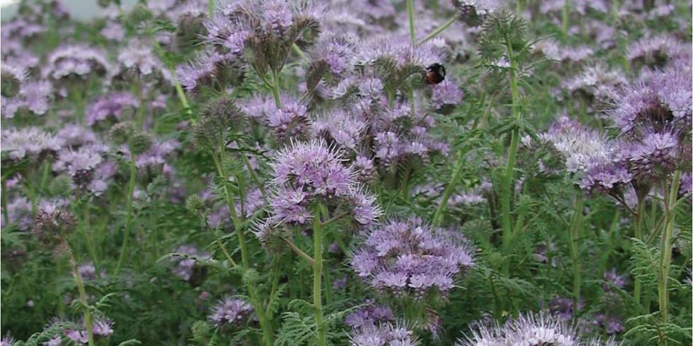 Insektenfreundliche Stauden & Gehölze / Trachtverbesserung