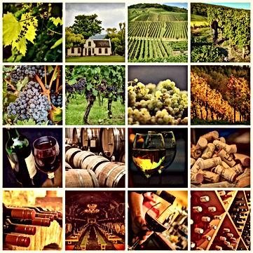 wine-1597376.jpg