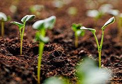 healthy_soil_1168x.jpg