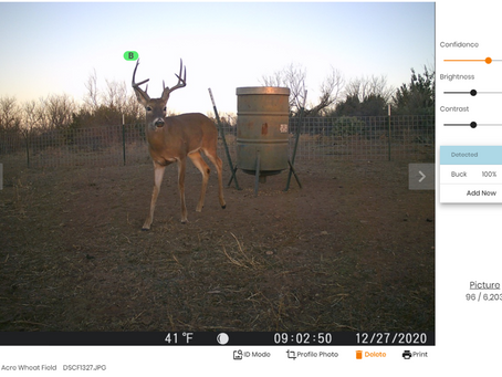 A Winter Trail Camera Survey? Absolutely!