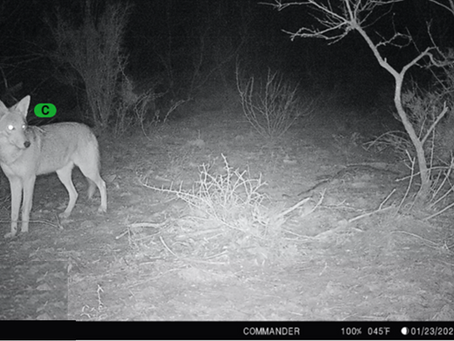 Setting clean camera traps and working smart with HuntPro