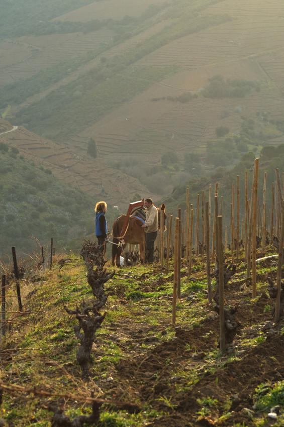 Valérie et Laurent, vigne du Llaner