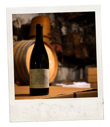 Collioure rouge Lluminari 2019 - Carton de 6 bouteilles