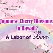 Hawaii Sakura Foundation