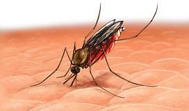 mosquito-anofeles-picando