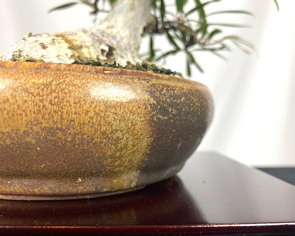 sam miller round round bonsai pot
