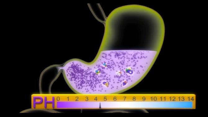 Avalie o grau de acidez de seu estômago. Veja como fazer o Teste do Bicarbonato!