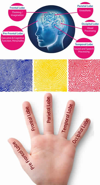 Fingerprint-and-Brain-Connection.jpg