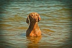 dog-1604050__180