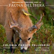 Material promocional Colonia Pellegrini, Ibera. Corrientes