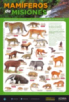 poster mamiferos de misiones imagen.jpg