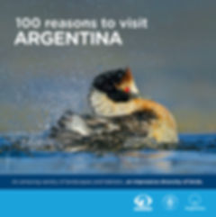 folleto 100 reasons baja tapa.jpg
