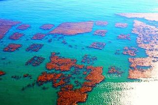 San Clemente Rock reef.jpg