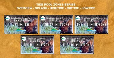 tide pool screenshot.png
