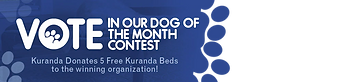 vote-dog-of-the-month (1).webp