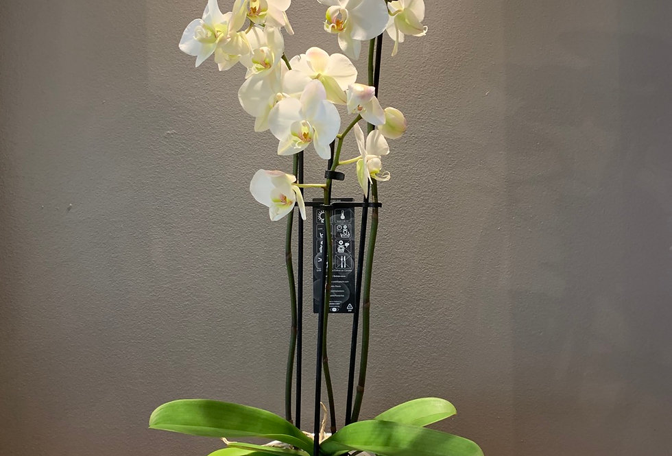 POTTED ORCHID PLANTER