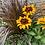 Fall Colour Large Planter