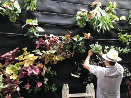 Três pontos importantes sobre Parede Verde / Jardins Verticais