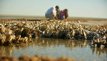 Oyster Beds.jpg